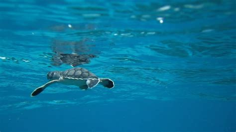 How You Can Help Protect Sea Turtles - Biscayne National ...