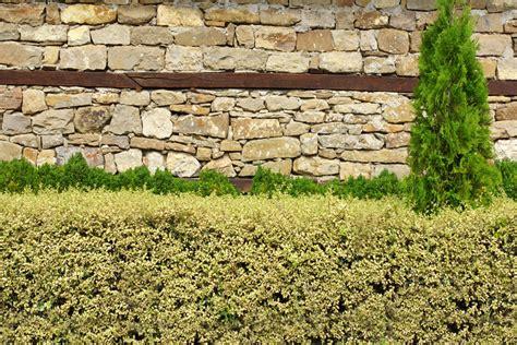 mauer zaun kombination mauer als zaun 187 so bauen sie einen stabilen sichtschutz