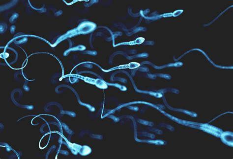 精子 を 作る