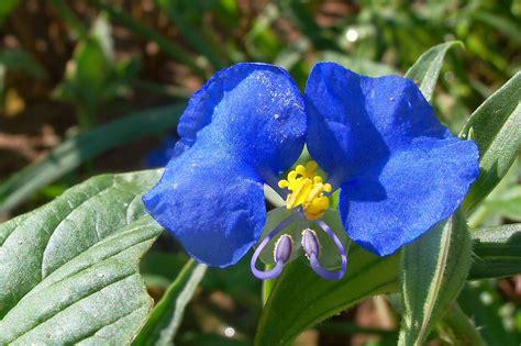 Yellow Center Blue Flower