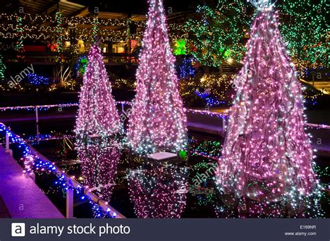beautiful christmas tree lights and other holiday