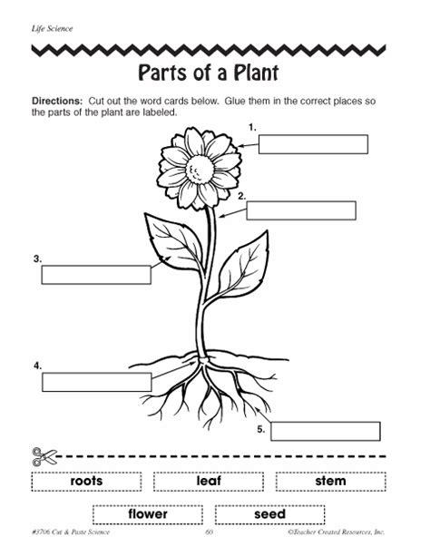 parts  plants worksheets click  partsofaplant