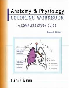 Marieb  Anatomy  U0026 Physiology Coloring Workbook  A Complete