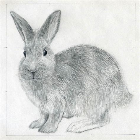 Rabbit Drawing How To Draw A Rabbit