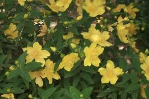 Arbustes Décoratifs à Fleurs : p pini res d 39 evrecy v g taux arbustes fleurs ~ Premium-room.com Idées de Décoration