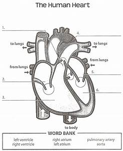 Printable Heart Diagram | Diagram Site
