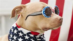 10 lost pet prevention tips for the Fourth of July