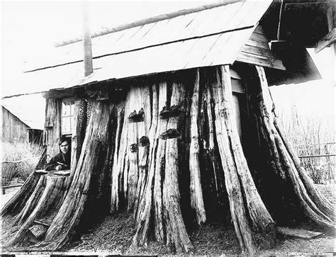 cedar stump house  log homes building  house
