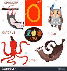 image gallery o animals With animals with the letter o in their name