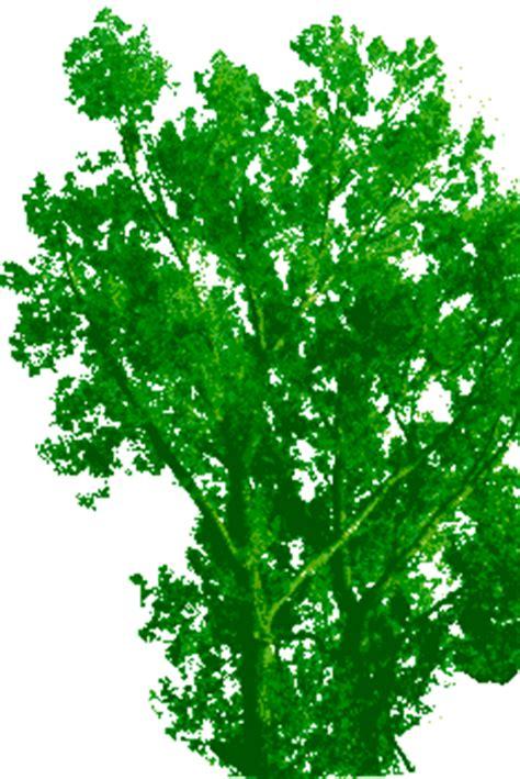 bäume als sichtschutz baum