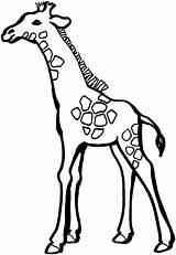 Giraffe Coloring Pages Animals Wildlife Printable Giraffes Unusual sketch template