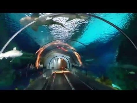Seaworld San Diego Shark Encounter Youtube