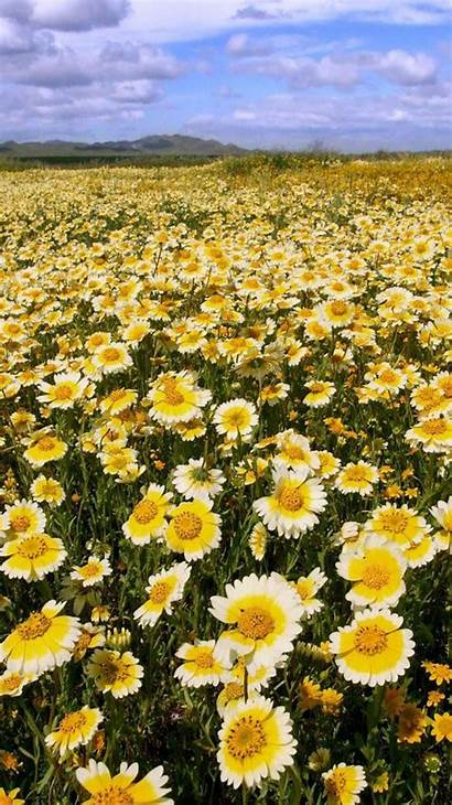 Iphone Flowers Wallpapers Flower Backgrounds Plain California