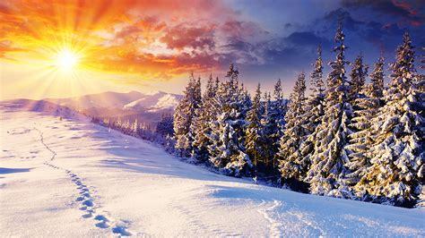 wunderschoene winterlandschaft winter schnee kiefern