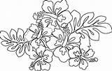 Hawaiian Coloring Flower Lei Printable Flowers Drawing Sheets Leaf Leaves Drawings Blank Getdrawings Getcolorings Taro Paintingvalley Popular sketch template