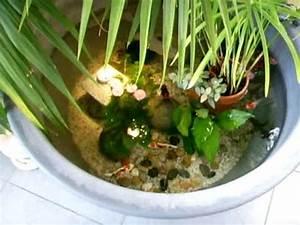 bassin d39interieur youtube With petit jardin d interieur