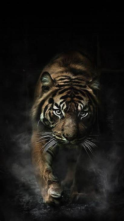 Tiger Iphone Wallpapers خلفيات Animal Phone Backgrounds