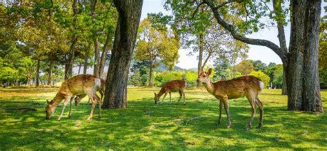 Wildtiere Im Garten  Das Solltest Du Unbedingt Wissen