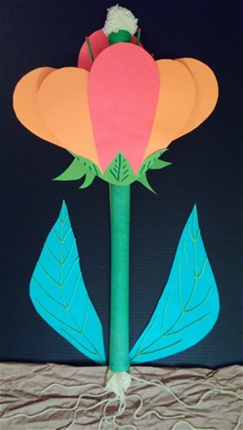 Diagram Of Reproductive Part Of A Flower