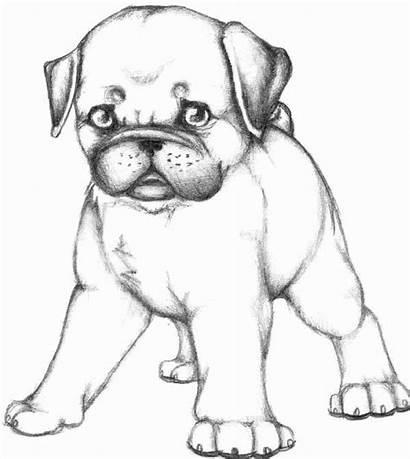 Coloring Pug Dog Skecth Puppy Printable Doug