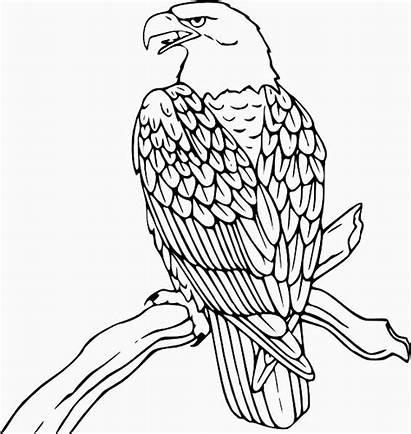 Eagle Coloring Bird Printable Pages Bald Clip