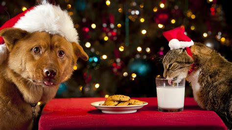 pet safety holiday foods are off limits for your pet