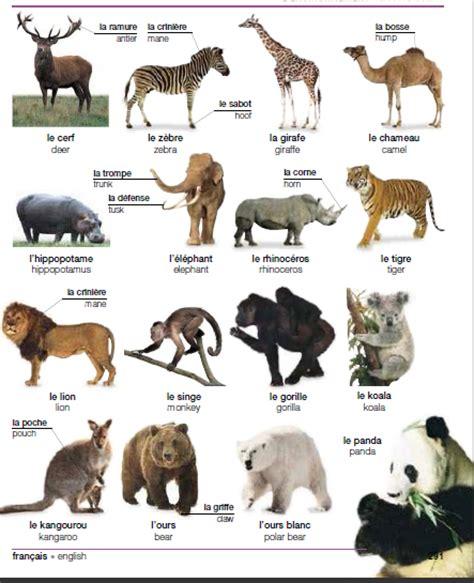 le fran 231 ais pour emigrer au les animaux vocabulaire fran 199 ais