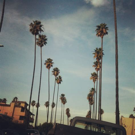 la palm trees wallpaper gallery