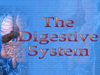 digestive system   charlotte thompson teachers pay