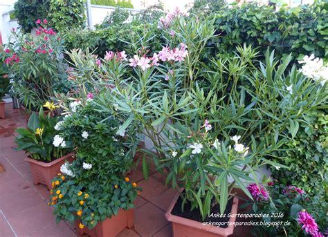 Extrem Winterharte Kübelpflanzen by Winterharte K 252 Belpflanzen Sonnig Wohn Design