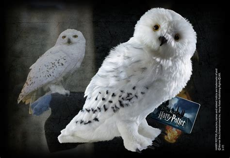 Harry Potter Wallpaper Hedwig Owl by Free Shipping Harry Potter Hedwig Plush 30cm Figure