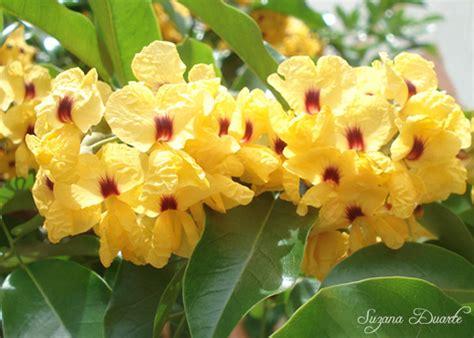 Conheça A Flor do Pau-Brasil | Flores - Cultura Mix
