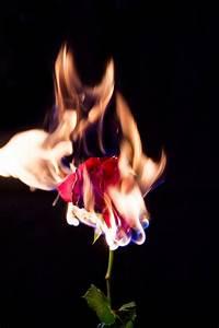 Flowers On Fire Ellen Ericsson