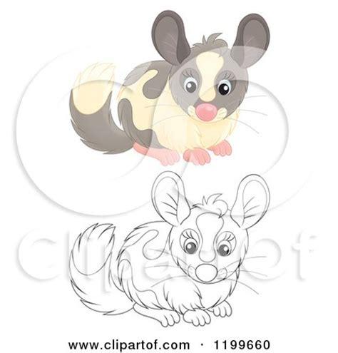clipart   cute gray chinchilla royalty  vector