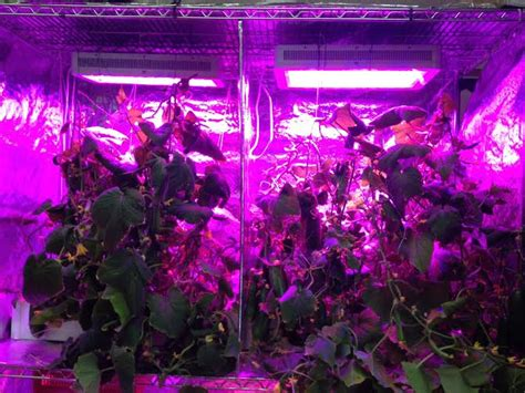 growing vegetables indoors with led lights grow gallery grow light photos advanced led lights