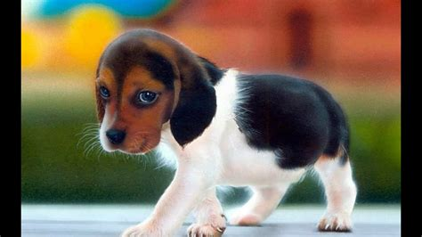 Top 10 Most Beautiful Dogs In The World