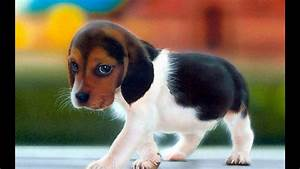 Top 10 most beautiful dogs in the world - YouTube  Cutest