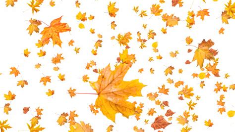 Falling Leaves Wallpaper Animated - orange autumn leaves fall to the ground soft and subtle