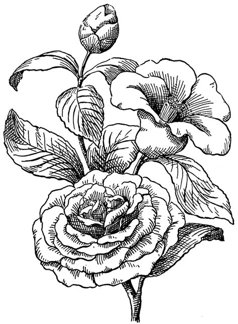 hibiscus flower drawings   clip art