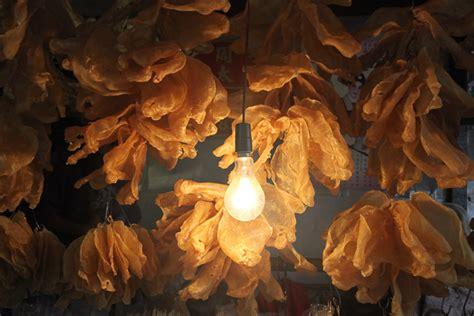des vessies pour des lanternes charles r 233 alisateur multimedia web photos vid 233 o