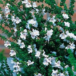 Kuebelpflanzen Winterhart Bluehend : gartenblick ~ Whattoseeinmadrid.com Haus und Dekorationen