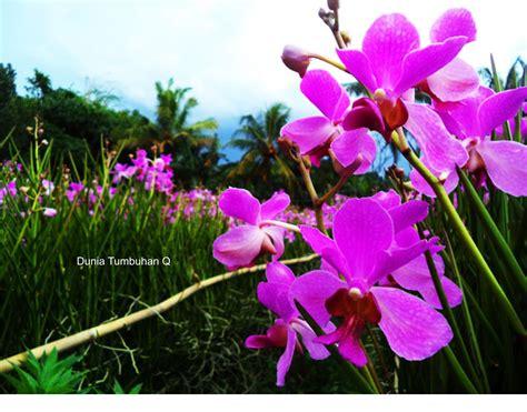 jenis bunga anggrek populer indonesia copy dulu