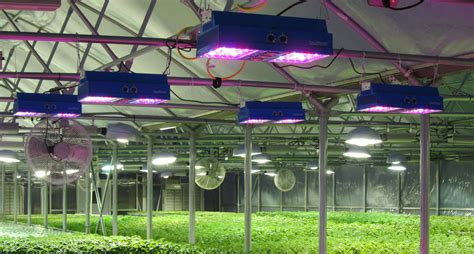greenhouse led grow lights going green to stay in the black greenhouse product news