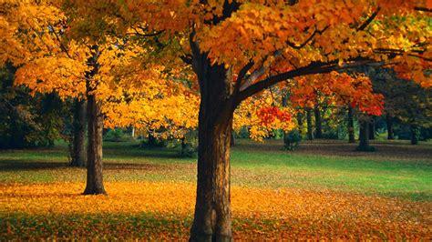 Beautiful Autumn Trees Wallpapershttprefreshrose