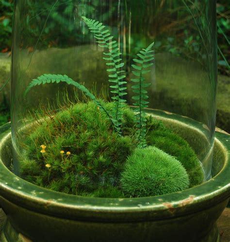 where can i buy moss for a terrarium moss and fern terrarium terrariums pinterest ferns i love and cottages