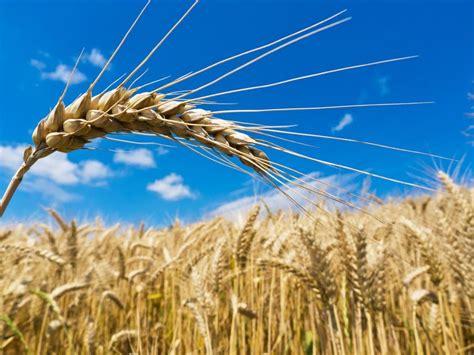 dont ignore  heart healthy grain john douillards