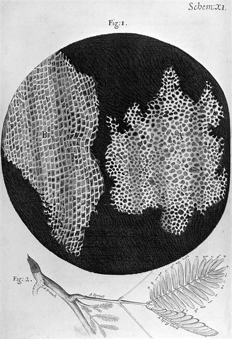 robert hooke micrographia cork wellcome collection
