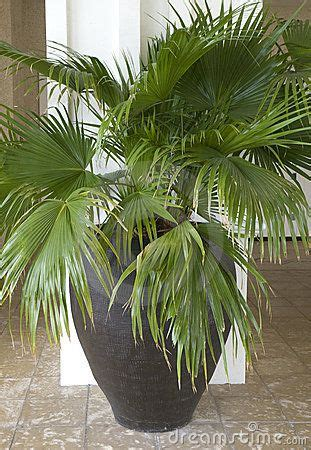 potted palm tree sunroom patio