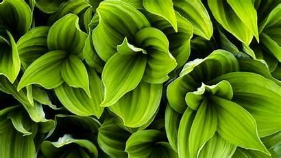 Plant Leaves Leaf Wallpapers Plants Background Backgrounds