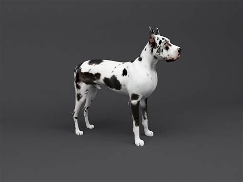 great dane  print ready dog model  model  printable
